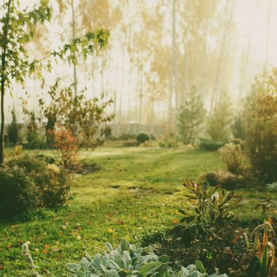 Top Tips for Getting Your Garden Winter Ready