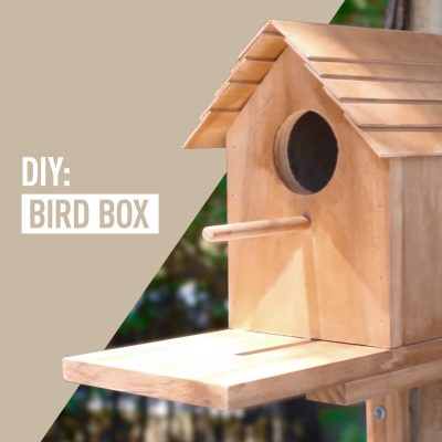 DIY Bird Box